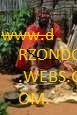 psychic, lost love spells and astrologer:www.drzondo.webs.com.